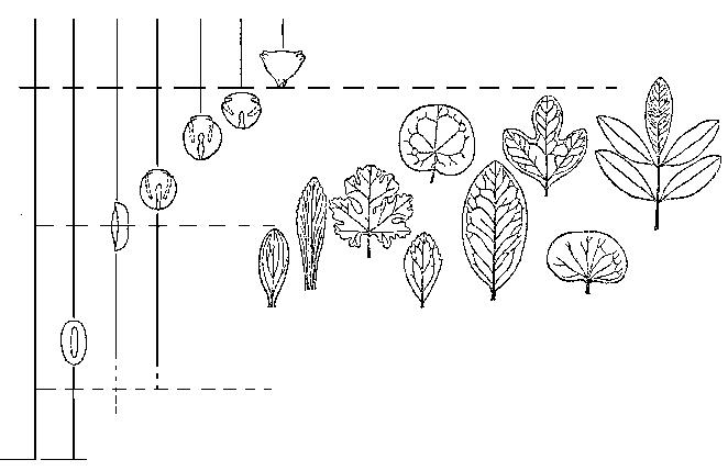 Распределение в меловых отложениях основных типов пыльцы и листьев покрытосеменных.